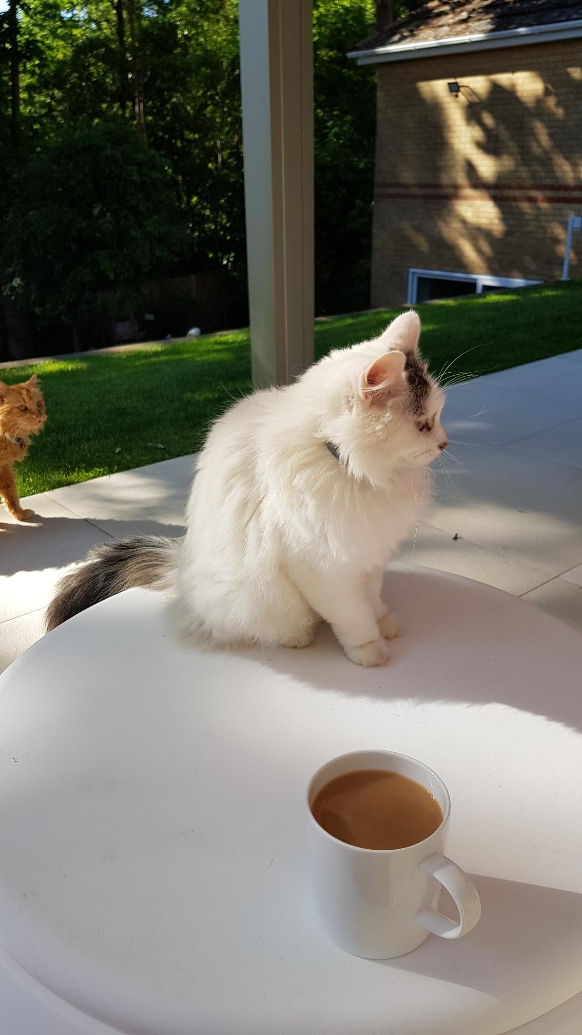 Snodrop Cat