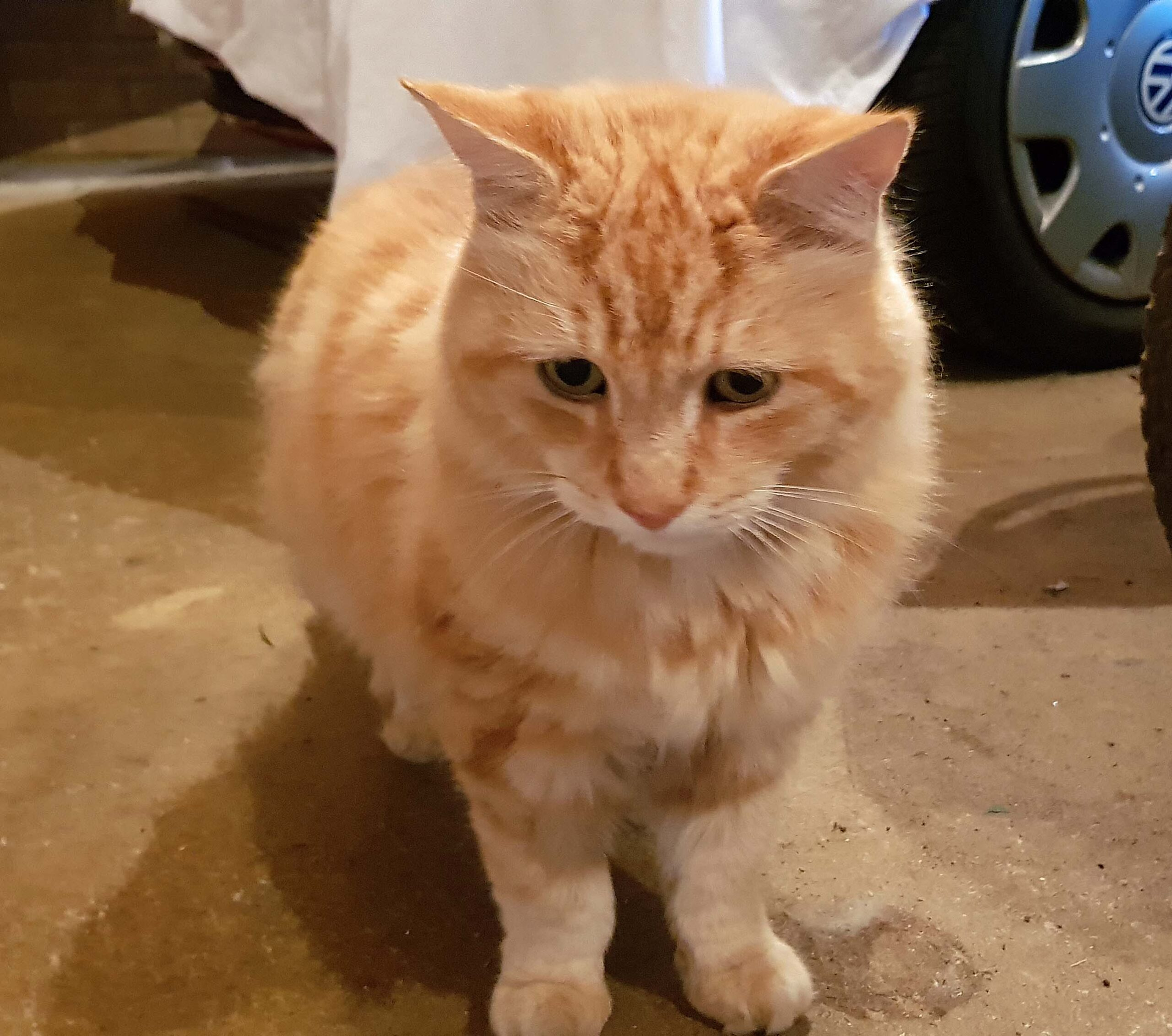 Denis the Cat