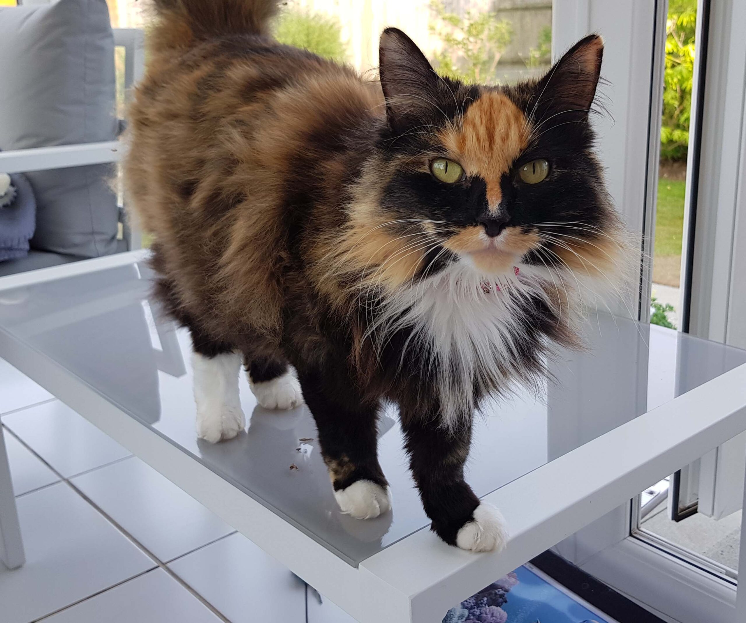 Sponsor a Cat in Hastings UK