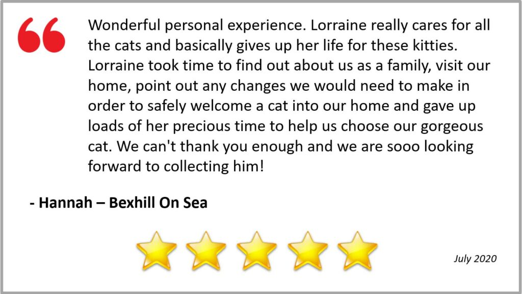 Review for cat Call Hastings