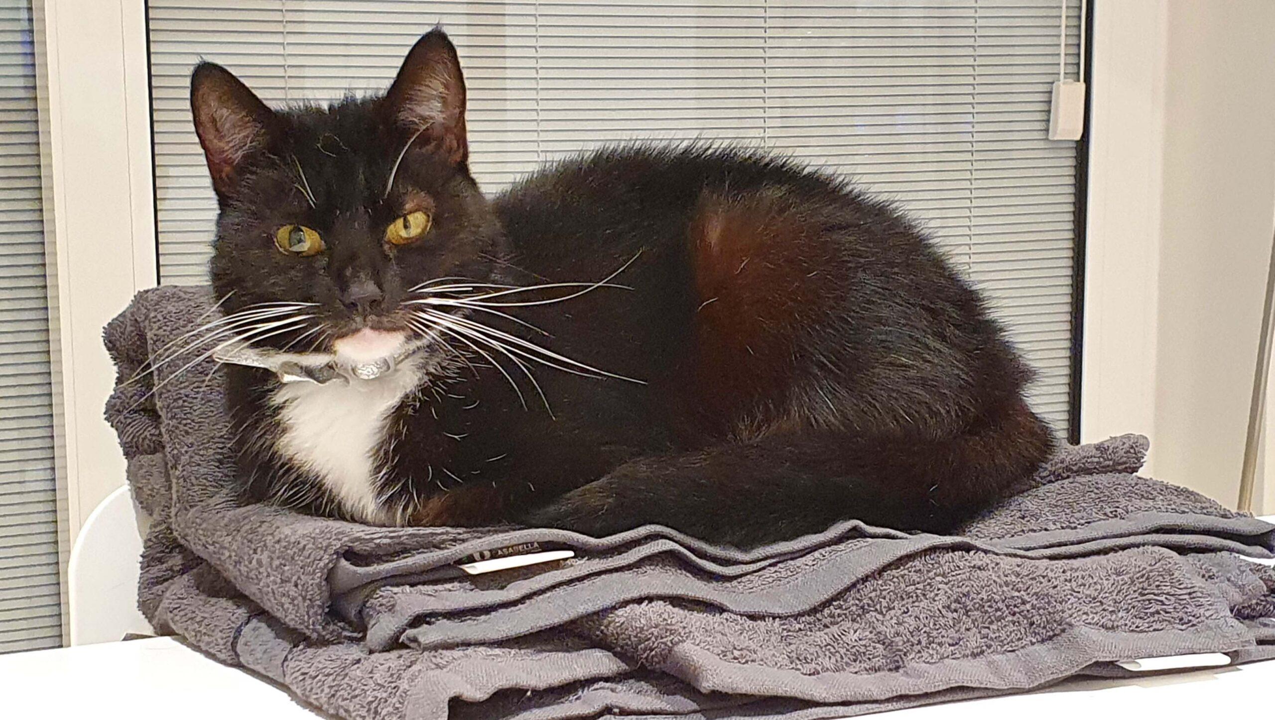 Dear Twiggy Cat recued by Cat Call