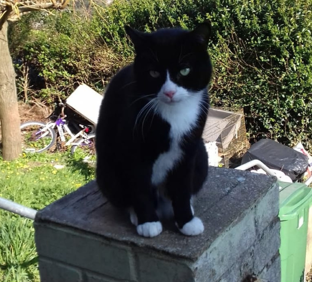 Have you seen this Cat missng in Hastings