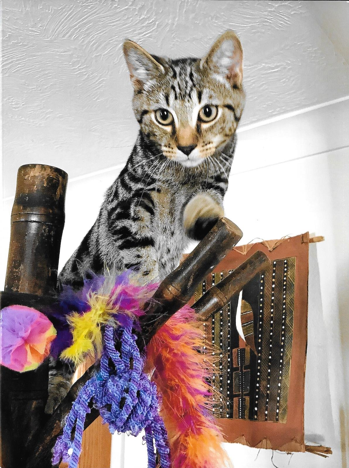Homed by Cat Call Hastings