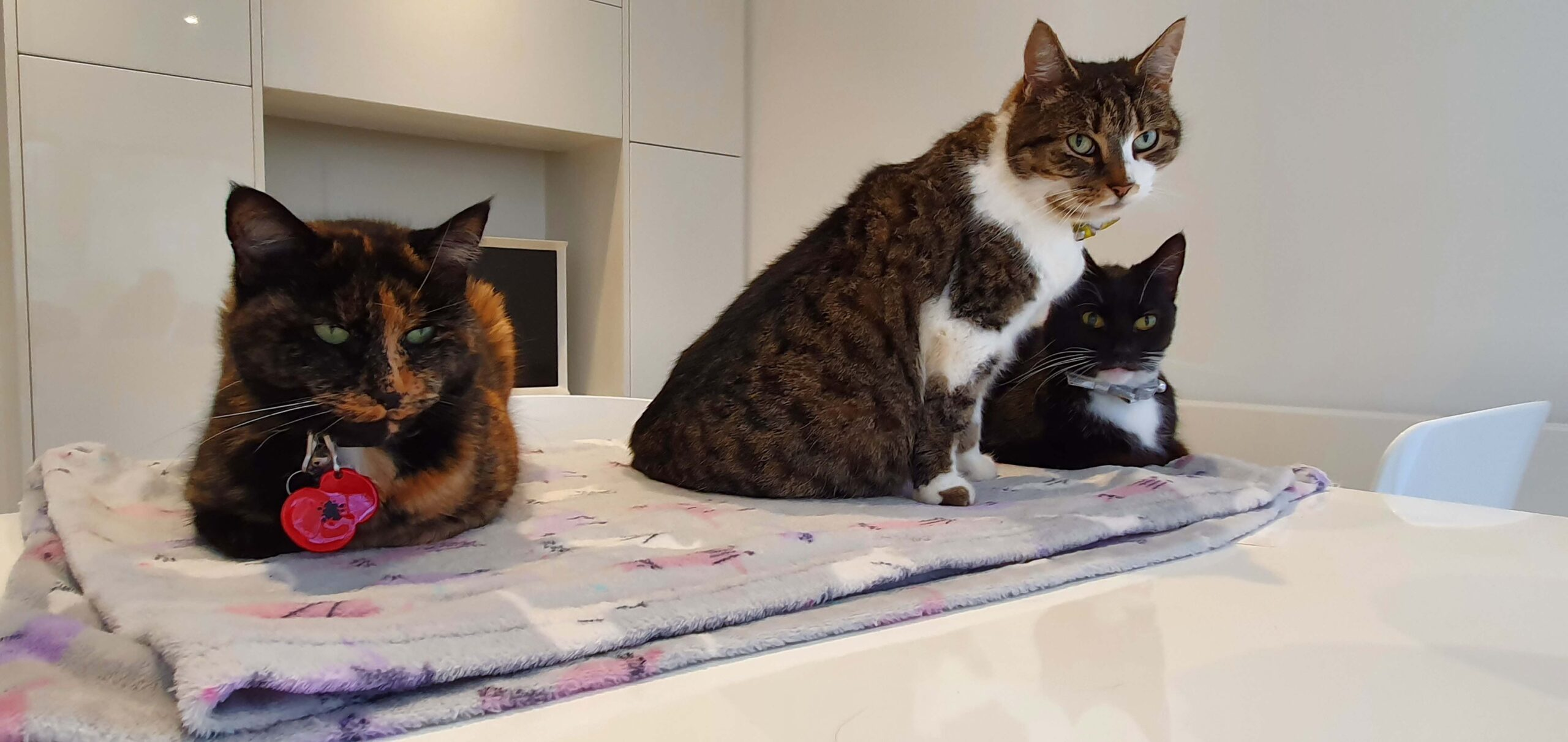 Sissy Woo woo, Bonnie and Twiggy at Cat Call