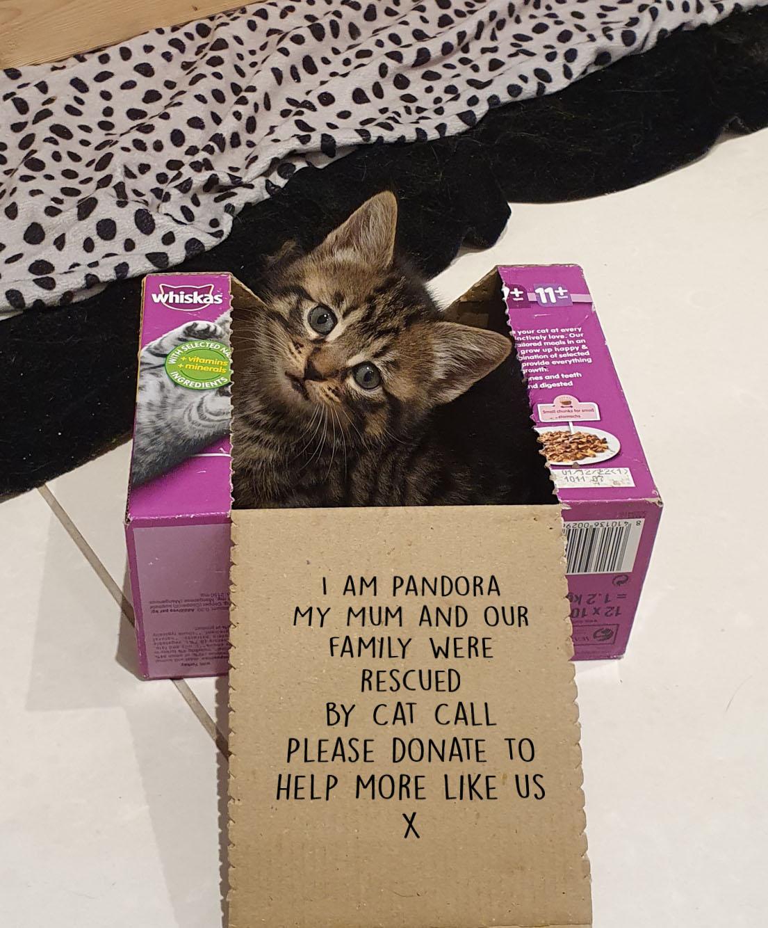 Help Cat Call help Cats like me