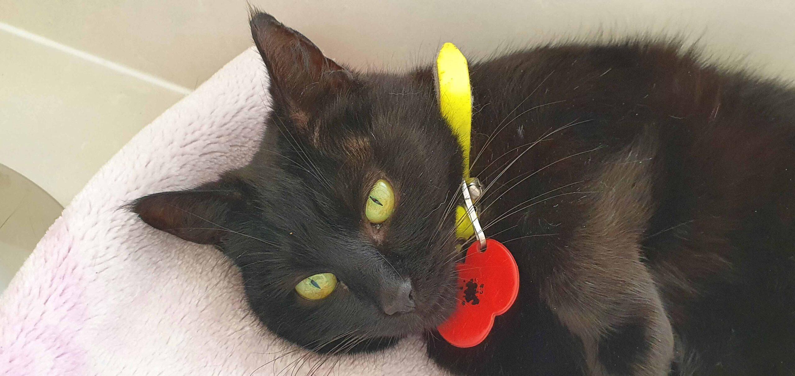 Sponsored Cat at Cat Call Hastings