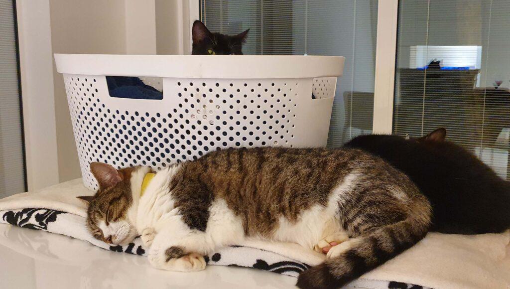 Bonnie at Cat Call
