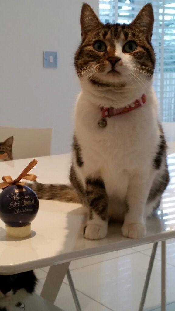 Bonnie a gentle Cat