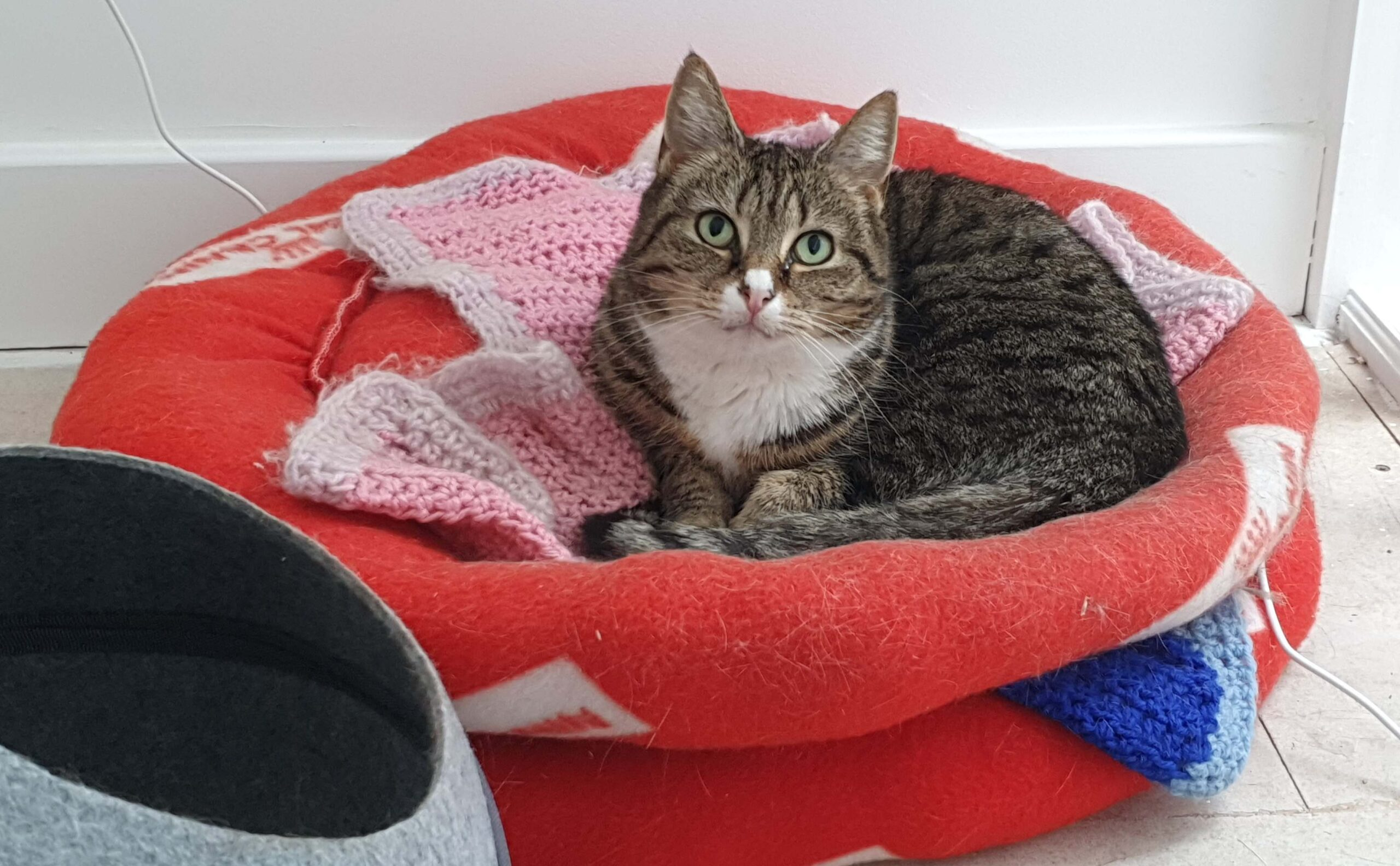 Cat Call homing rescued Cats