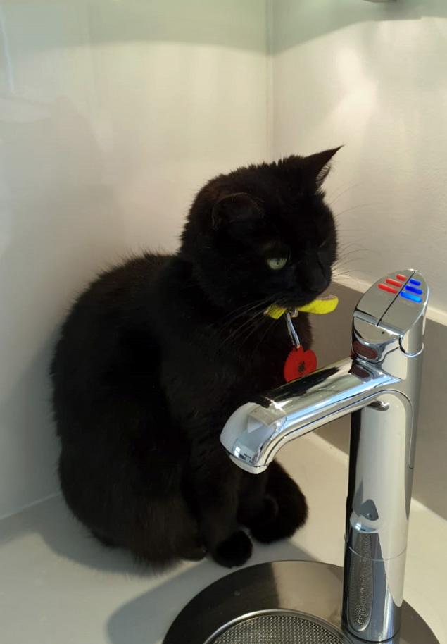 Sponsor a Cat Call Charity Cat