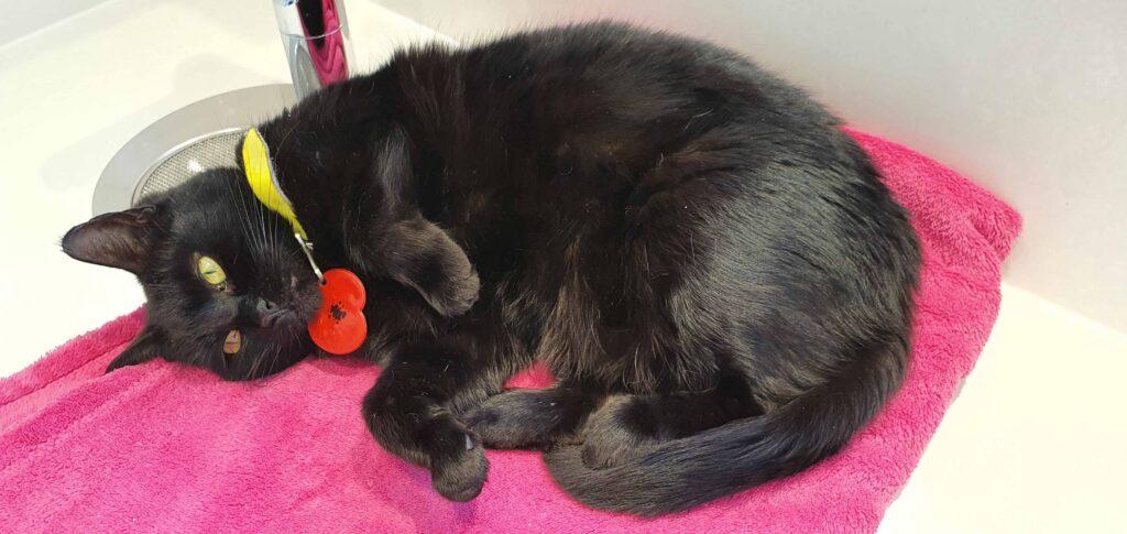 Cat Call rescued Cat