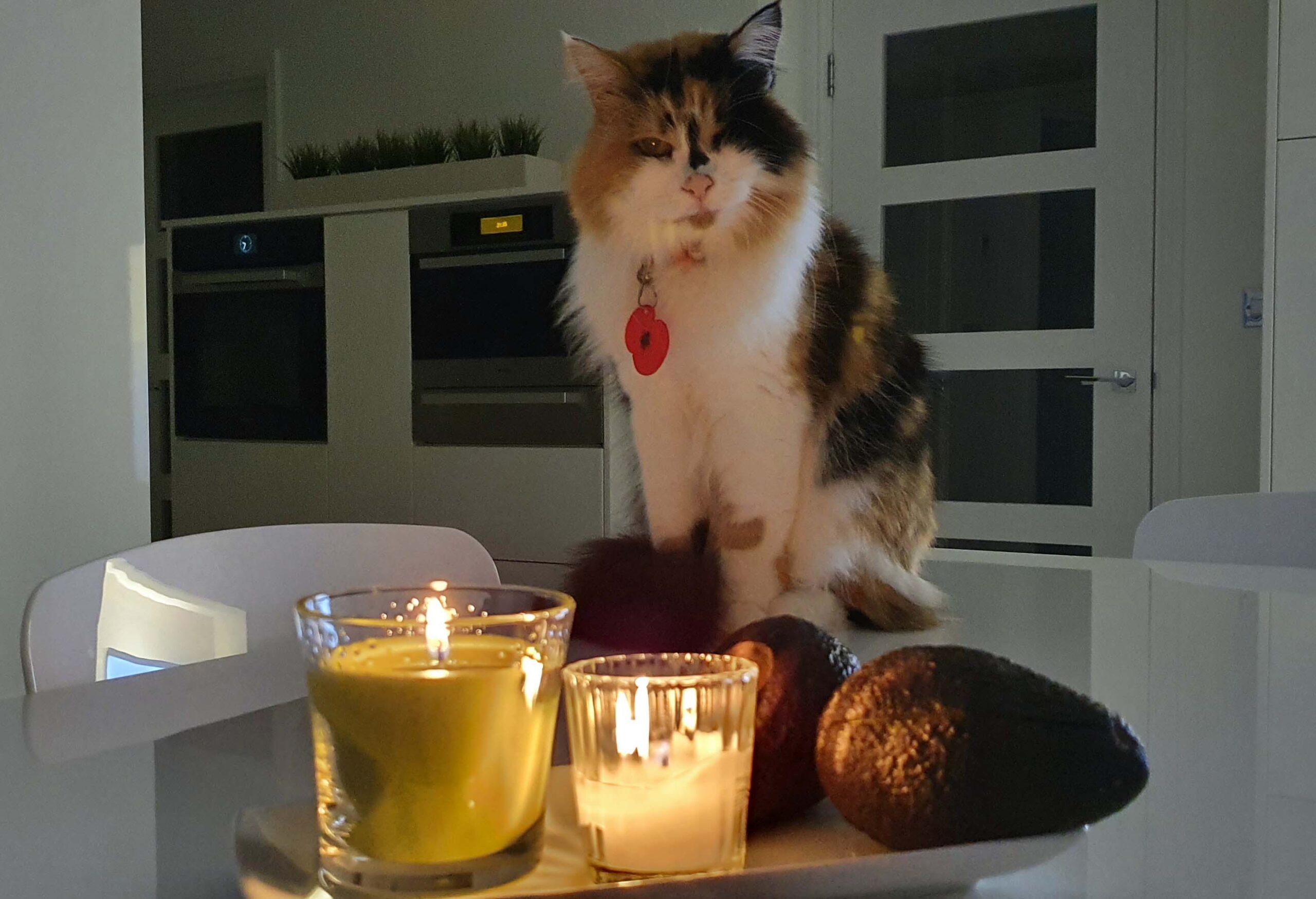 Cat Call Cat Precious