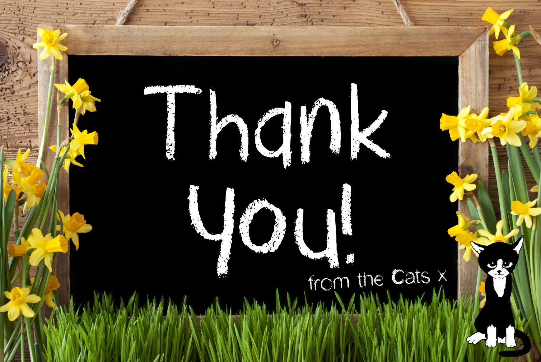 Thank you from the Cat Call Cats