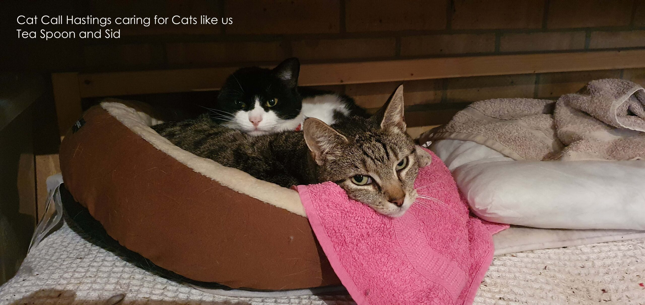 Cat Call Charity caring for Cats in Hastings since 1983