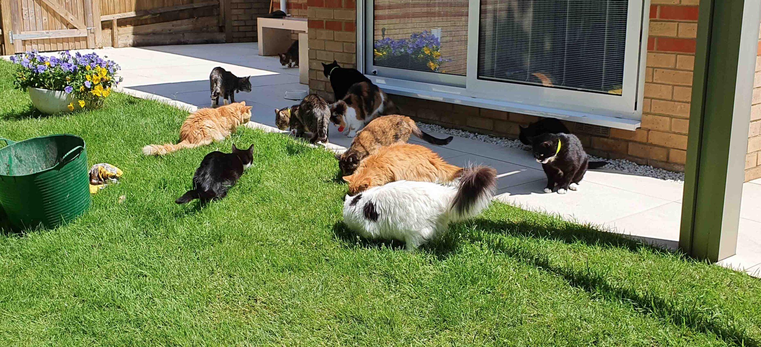 Cat Call Charity Hastings UK