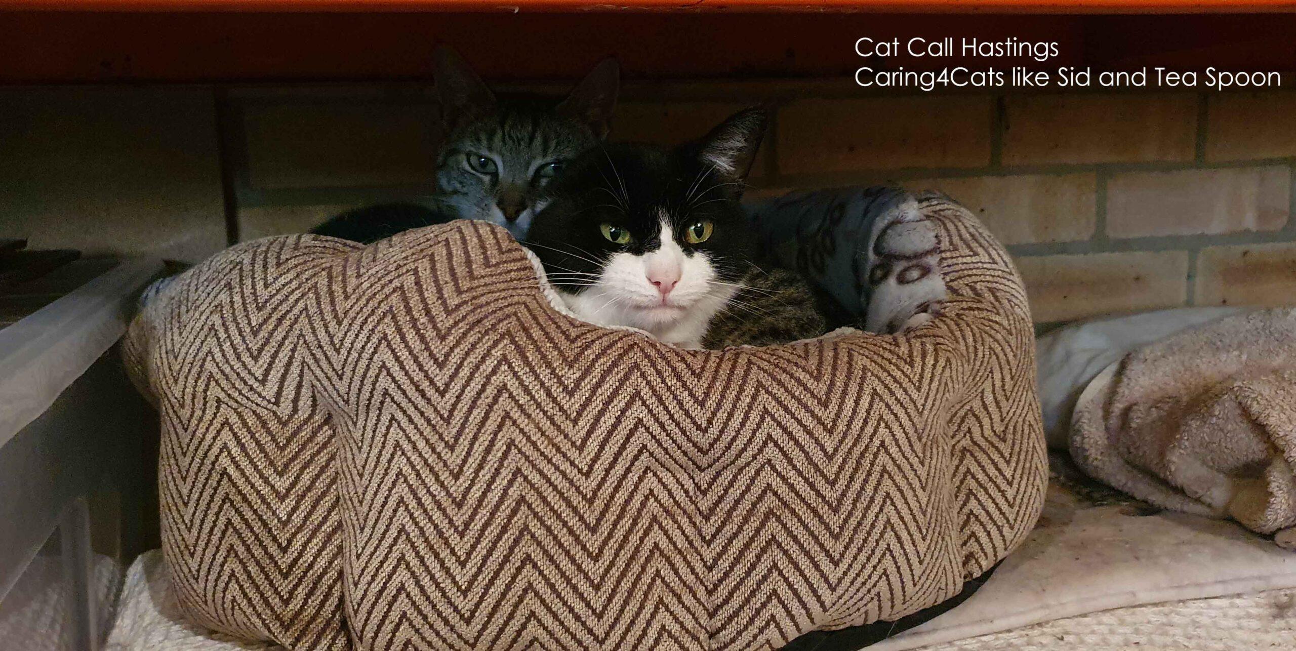 Cat charity in Hastings