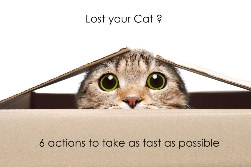 Actions to take if you have lost your Cat