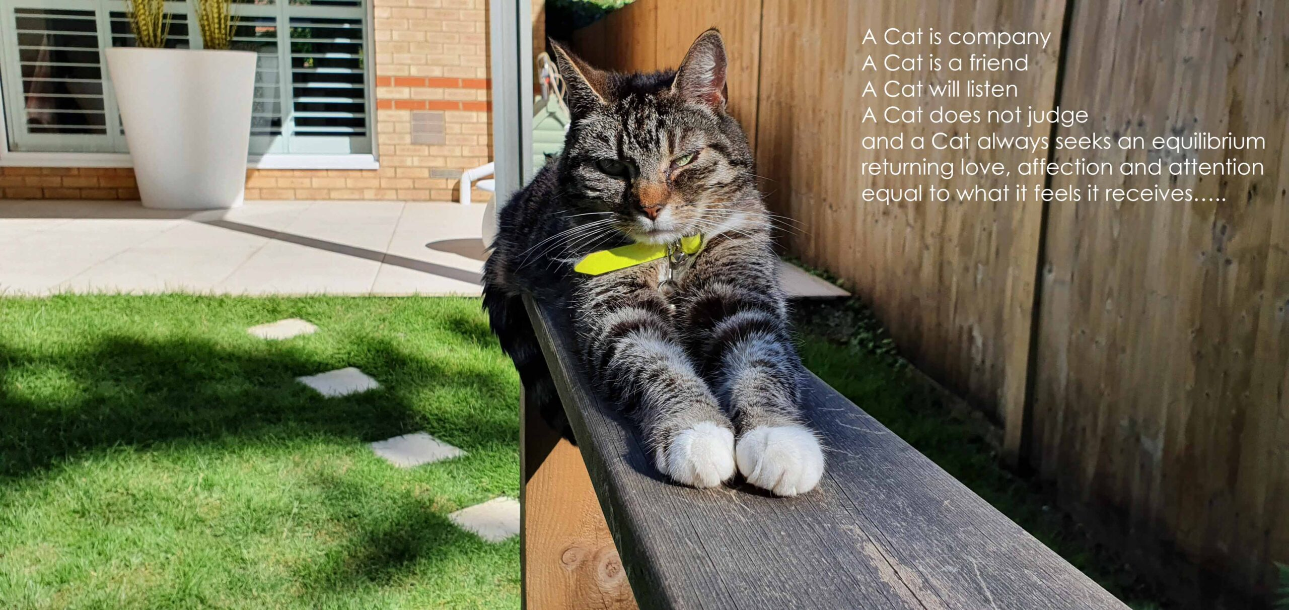 Understanding Cats it starts with YOU
