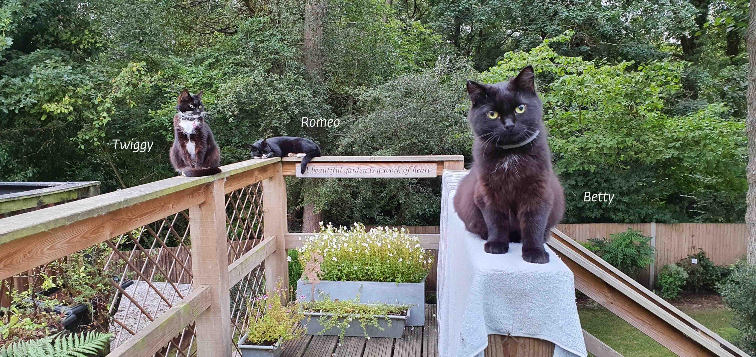 Friends at Cat Call