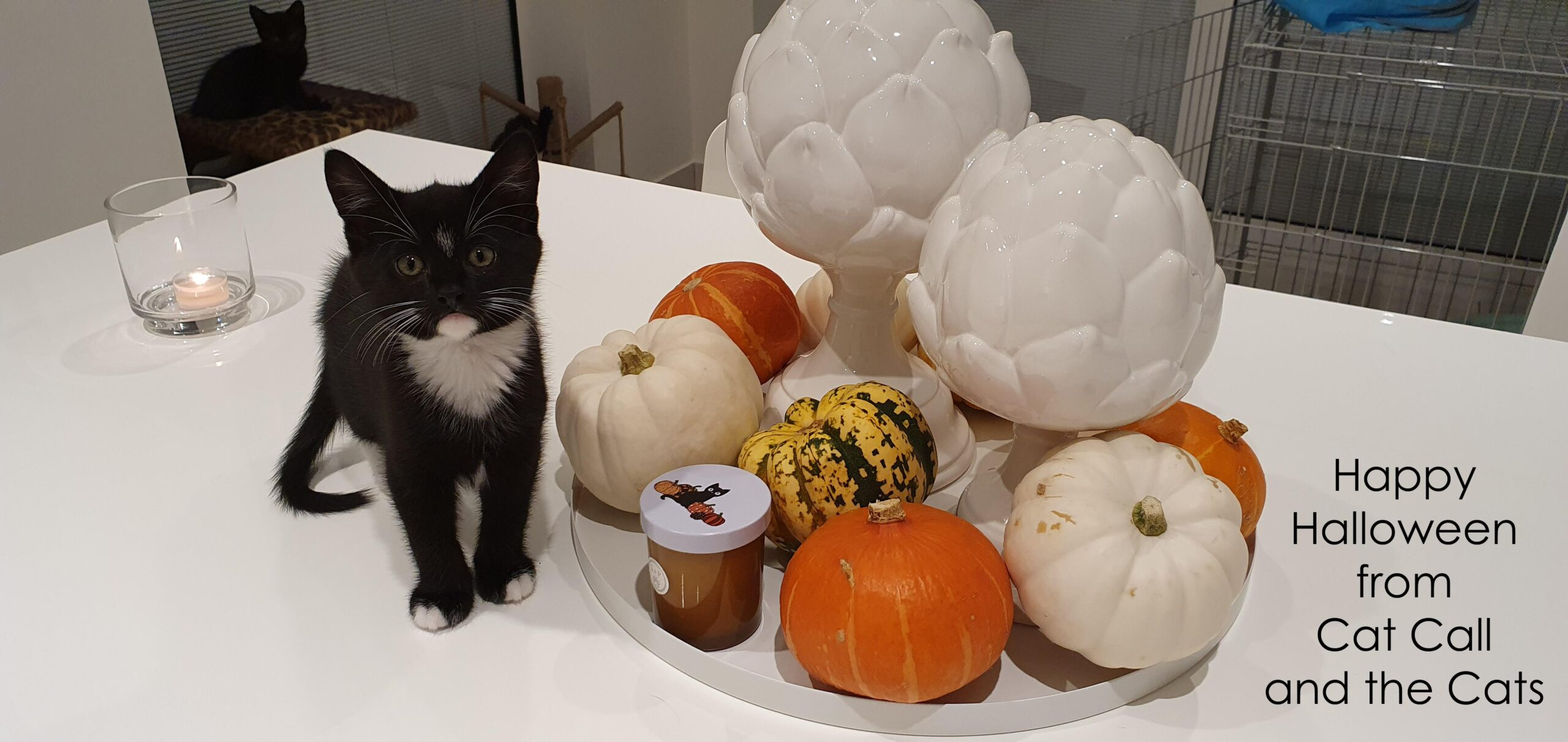 Happy Autumn from all the Cats at Cat Call